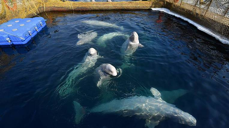 Prisoners of the whale prison cannot be released due to the flood