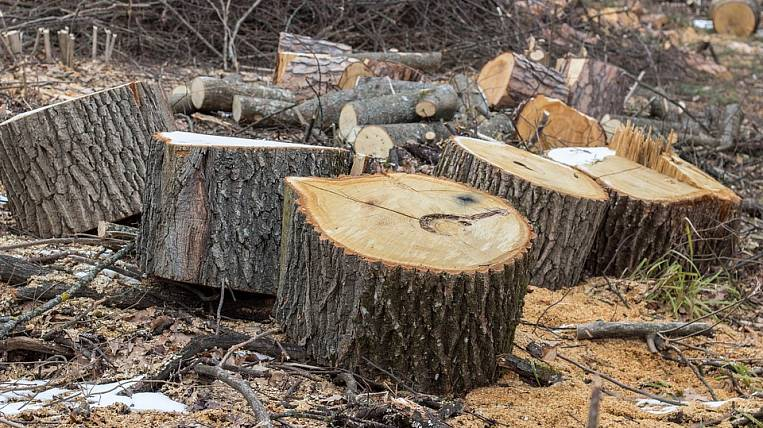 Contracts for deforestation are terminated in Angara