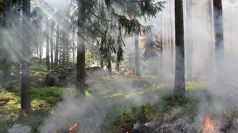 An increase in the number of forest fires is predicted in the Far East
