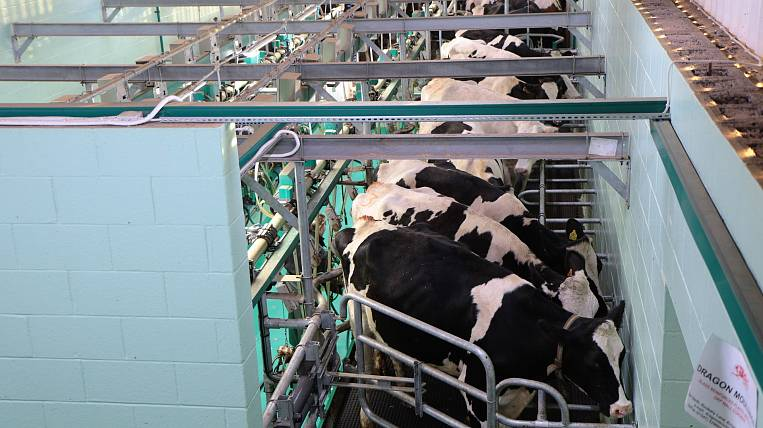The milk potential of cows is tested in the Khabarovsk Territory