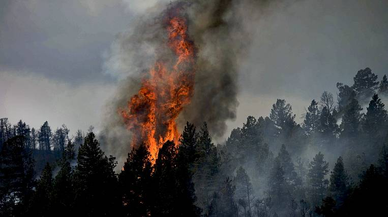 Transbaikalia and EAO instructed to strengthen control over the forest fire situation