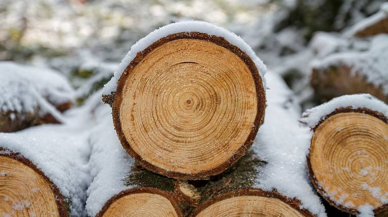 Primorye is the first in Russia to begin exchange trading in timber for export