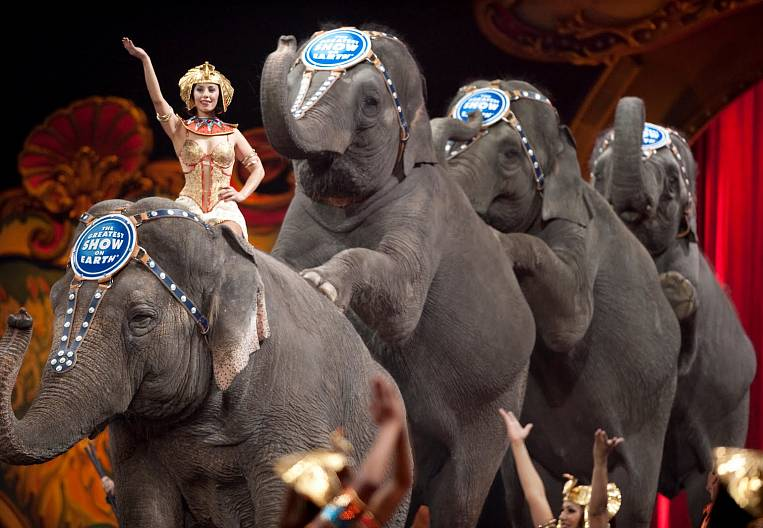 Vladivostok Circus according to PPP rules