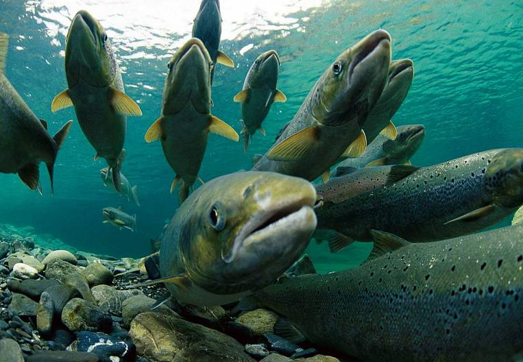 Regions lack the authority to regulate the fishing industry