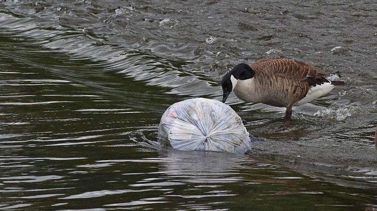 Magadan company fined for river pollution