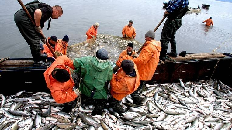 For 2015 year Kamchatka fishermen extracted almost 1 million tons of aquatic bioresources