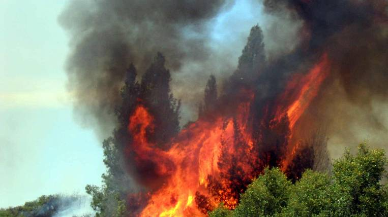 More than 10 regions of the country are not ready to fight forest fires - MNREP