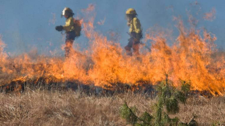 Forest fire on 300 hectares was liquidated in Transbaikalia
