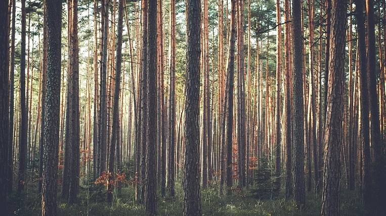 A criminal case was opened on the Ministry of Forestry of the Irkutsk Region