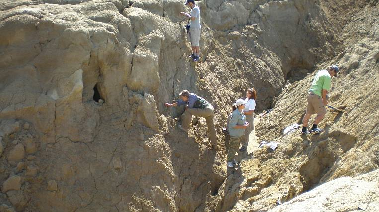 The new protected area will allow the study of dinosaurs in Transbaikalia