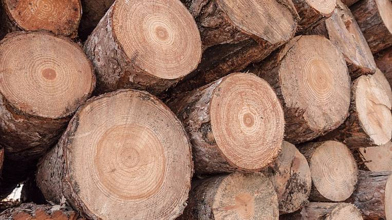 Control over deforestation will be strengthened in the Amur Region