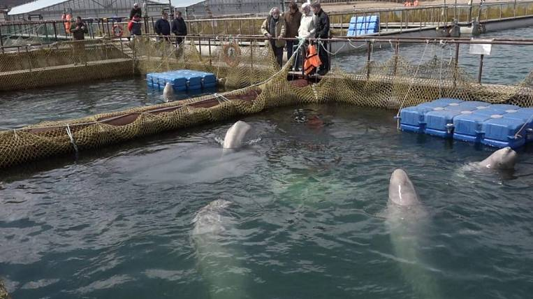 Ecologist: prisoners of the whale prison waiting for new tests
