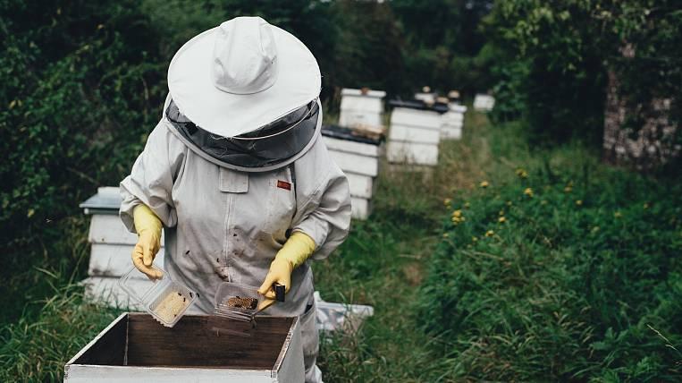 Beekeepers of Khabarovsk Territory Increased Six-fold Export of Honey
