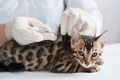 COVID vaccine for animals released in Russia