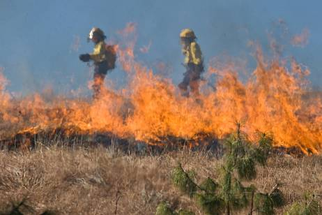The area of fires increased by 2,5 times in the Far East in a day