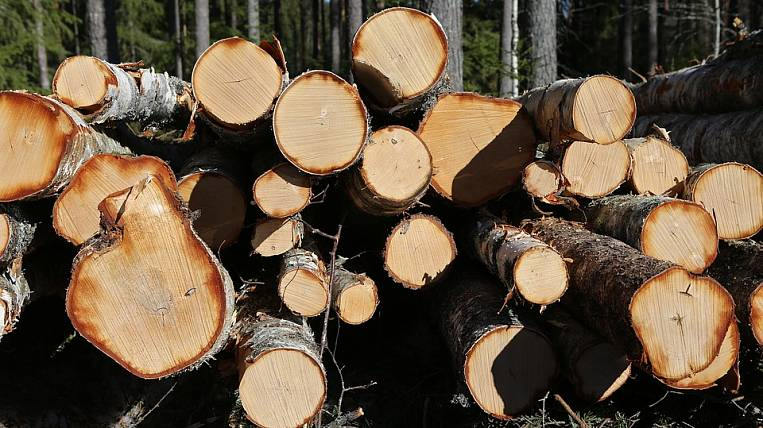 Wood in the Khabarovsk Territory want to transfer to the rails