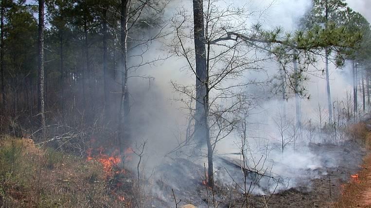 The fire hazard season began in the Amur region