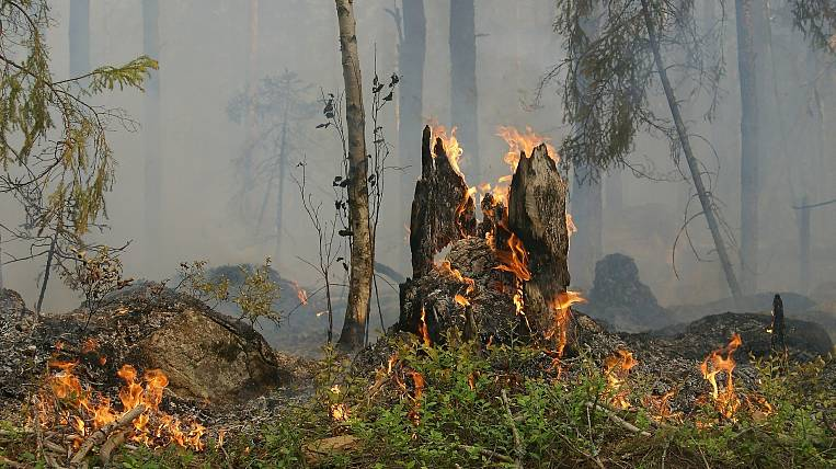 More than 20 thousand hectares of forest burns in Yakutia