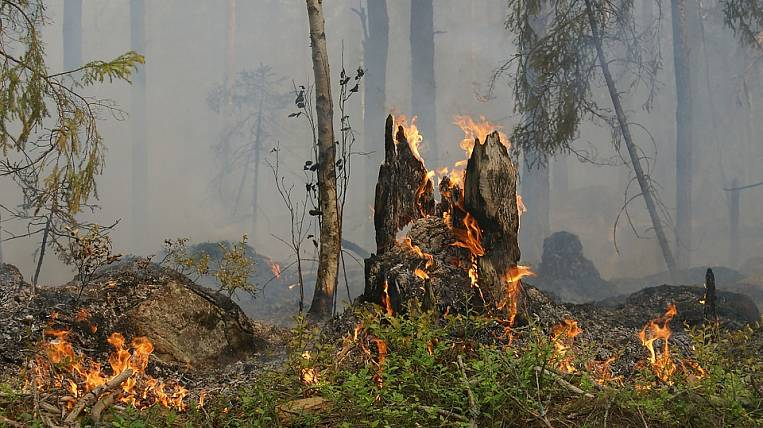 A resident of Transbaikalia was convicted of a forest fire