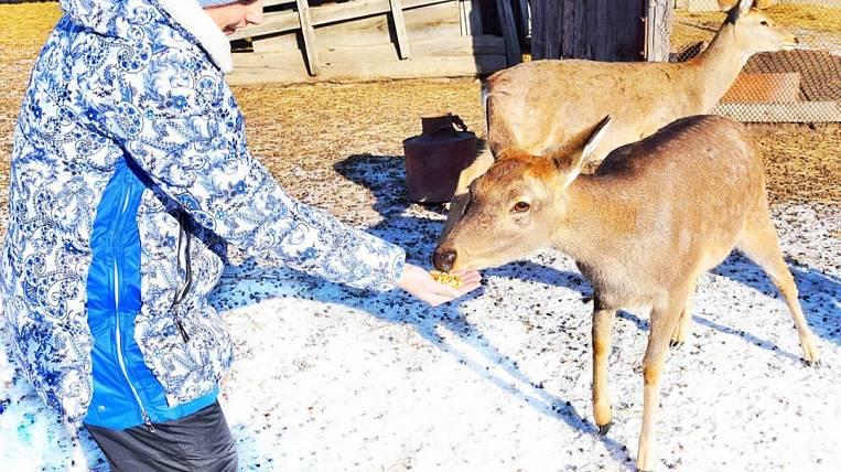 Deer breeding started on Far Eastern hectare in Primorye