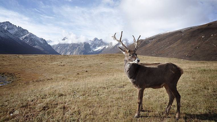 Social payments to reindeer herders increased for the first time in five years in Kolyma