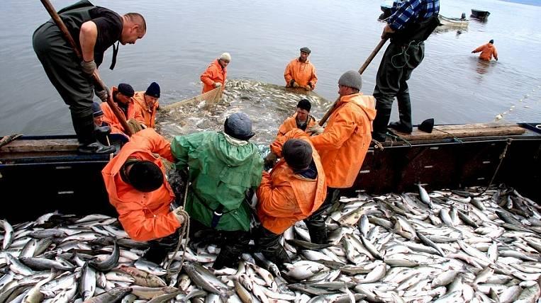 Рыбные предприятия хабаровского края