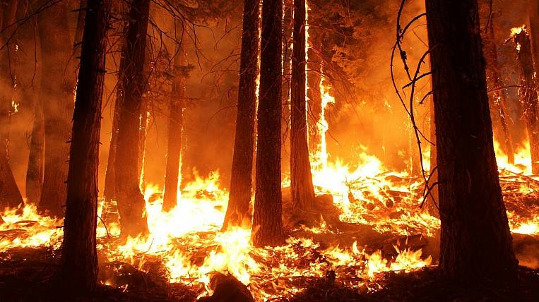 "In the Khabarovsk region burns reserve ""Komsomolsky"""