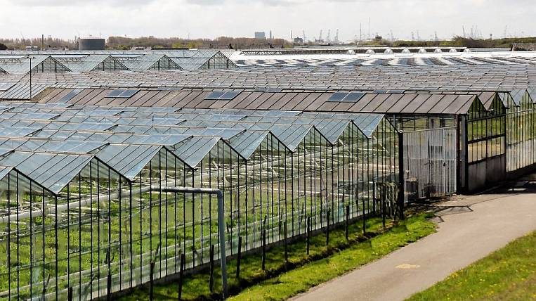 Belgium wants to create greenhouse complexes in the Khabarovsk Territory