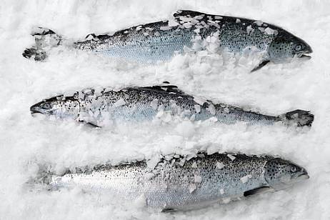 Frozen trout from China was not allowed in Primorye