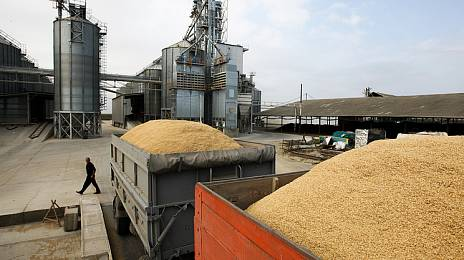 Grains are looking for a way out