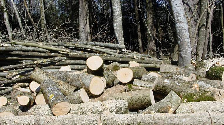 In Primorye revealed the smuggling of forests for 150 million rubles