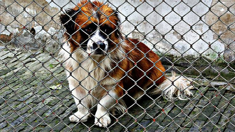 The State Duma criticized the idea of the head of Yakutsk on the tax on dogs