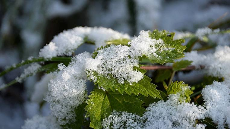 The first snow fell in Primorye