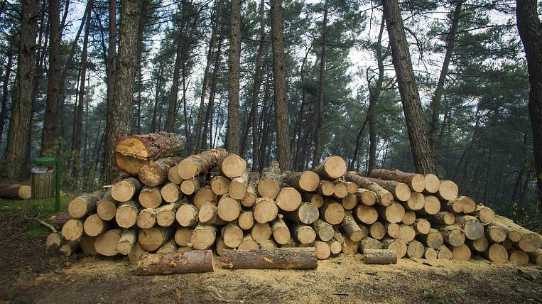 The case of large smuggling of forests is investigated in Primorye