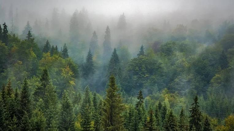 Amur region will receive 180 million rubles to protect forests