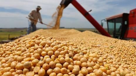 Soybean yield