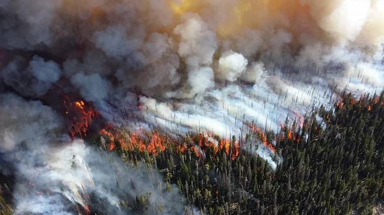 Increased fire hazard in forests is predicted in the Far Eastern Federal District