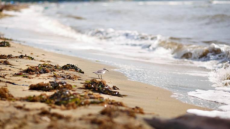 The beaches of Primorye will be closed because of the coronavirus