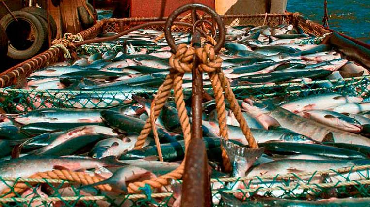 Fish investment calls will go in exchange for the construction of fishing vessels and fish processing plants