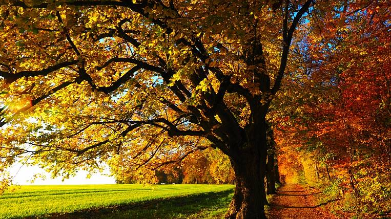 Governors of four regions of the Far Eastern Federal District want to limit the cutting of linden trees