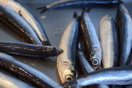 A manufacturer from Primorye has violated the regulations for the production of fish products