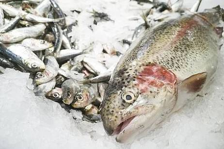 Almost 20 thousand tons of fish were sent to China by Kamchatka