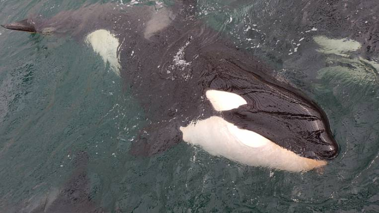 Fears of environmentalists for the release of prisoners of the whale prison were not confirmed