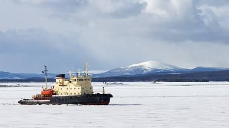 Arctic pie