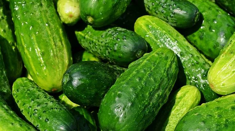 Chinese vegetables in the Amur region will be replaced by Kazan and Tajik