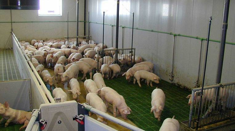 In the Amur region, there will be new pig-breeding and greenhouse complexes