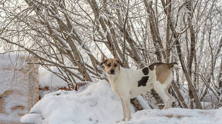 The mayor of Yakutsk announced threats after the situation with rabies