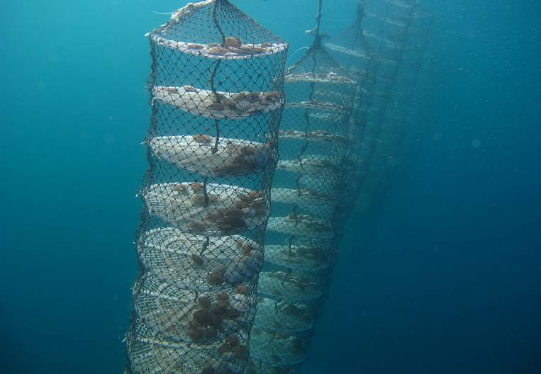 For the development of aquaculture in the Far East have developed a new law