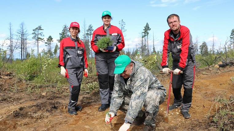 """The company """"Kolmar"""" will plant pine trees for reforestation in Yakutia"""