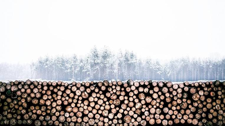 Exchange trading increased the cost of timber in Primorye